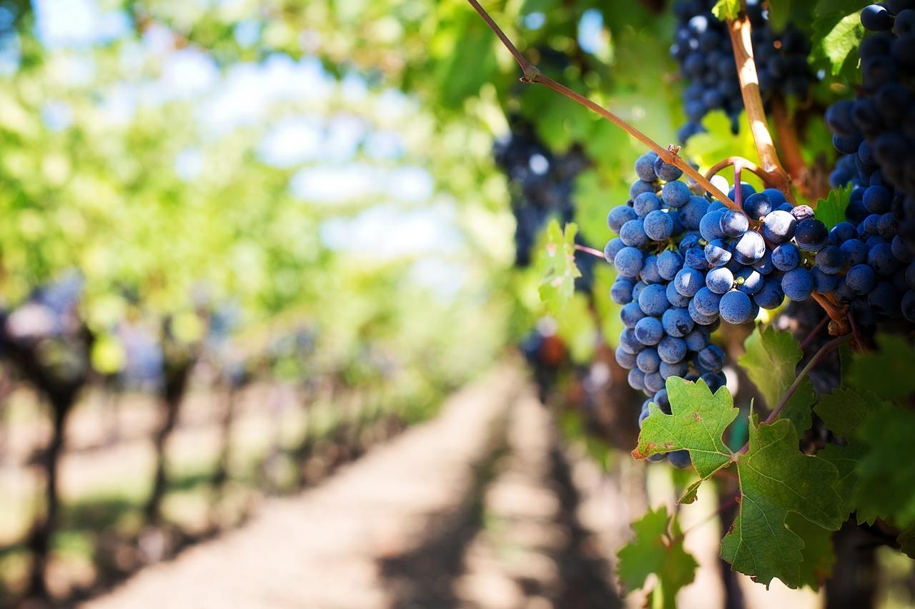 Les vins les plus chers du monde